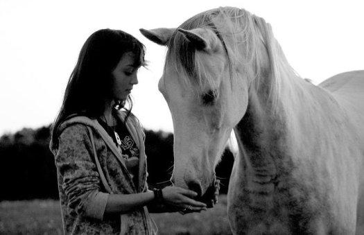 maris horse